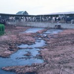 Factory Farm Manure Runoff