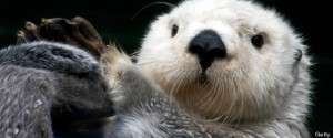 Sea Otters Help Fight Water Pollution